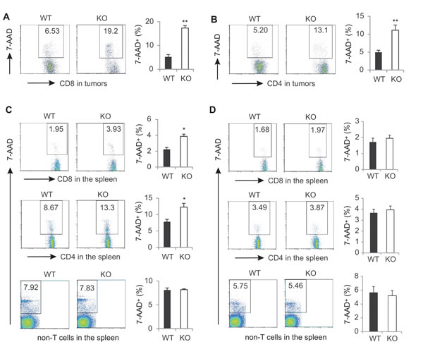 AMPK deficiency increases T cell death in tumor-bearing mice.