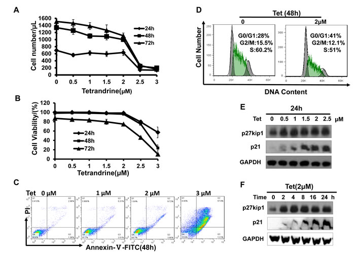Fig.3: Tetrandrine (2 μM) inhibits acute promyelocytic leukemia NB4 cell proliferation.