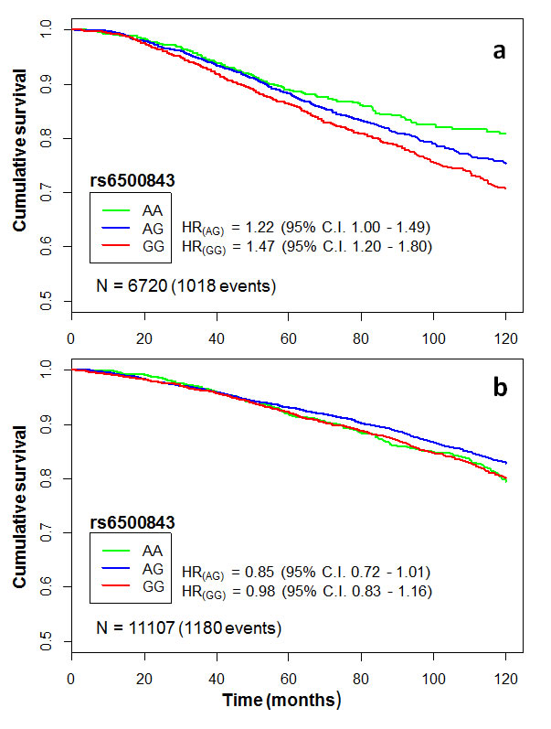 Kaplan-Meier curves illustrating cumulative 10-year overall survival among cases of the pooled iCOGS data set categorized by rs6500843 genotype.
