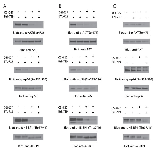 Dual targeting of PI3K and mTOR by BYL-719 and OSI-027 results in enhanced inhibition of activation of PI3K and mTOR pathways.