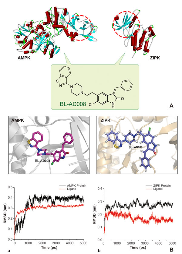 Modeling, docking and molecular dynamics (MD) simulations of BL-AD008 targeting AMPK and ZIPK.