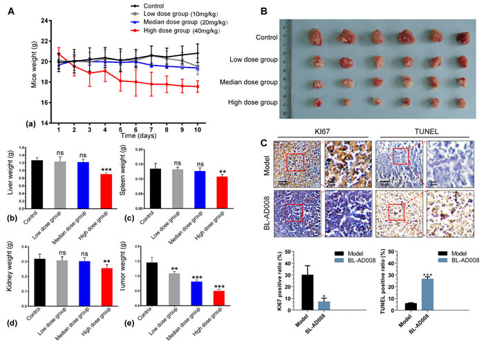 Anti-tumor effects of BL-AD008
