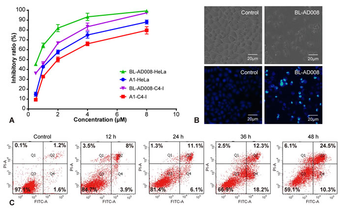 BL-AD008 induces apoptosis in HeLa cells.