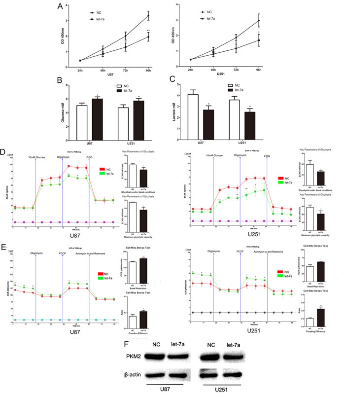 Let-7a represses glioma cell glucose metabolism by inhibiting PKM2.