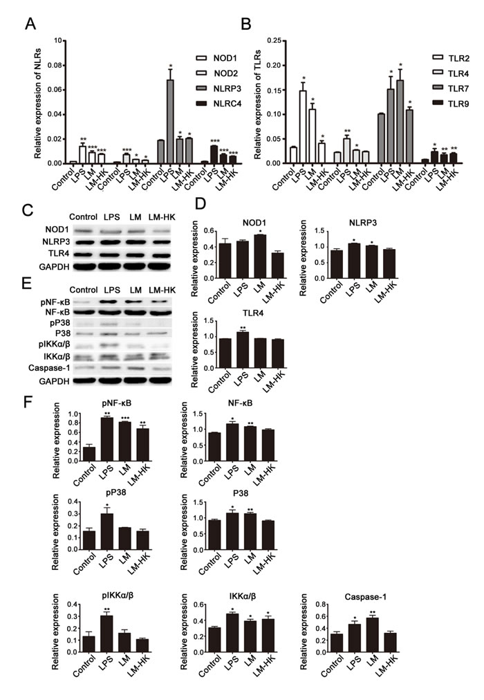 Fig. 2: TLRs and NLRs in LM-promoted dendritic maturation.