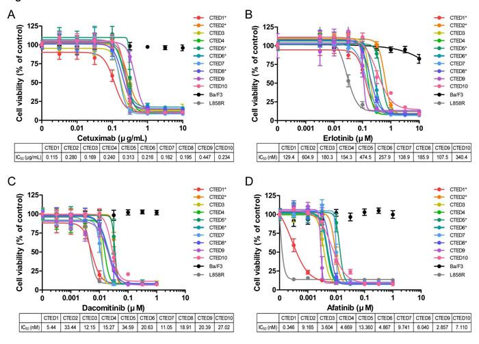 Oncogenic EGFR CTED mutants are sensitive to EGFR inhibitors