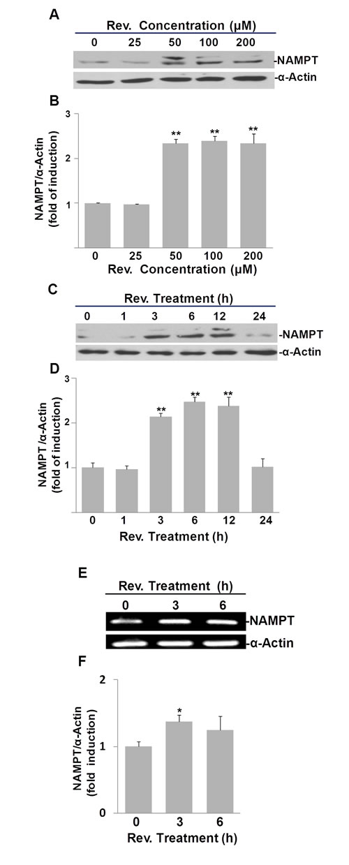 Fig.2: Resveratrol (Rev.)