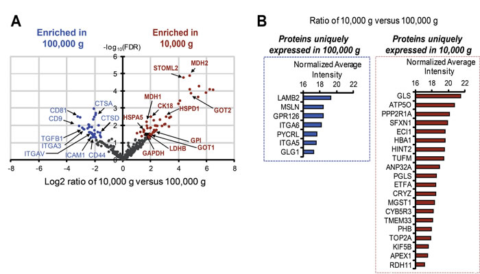 Identification of unique and differentially expressed proteins in large and nano-sized EVs.