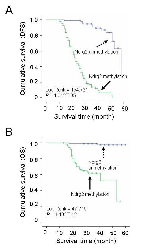 Correlation of Ndrg2 methylation level with survival of patients with gastric cancer.