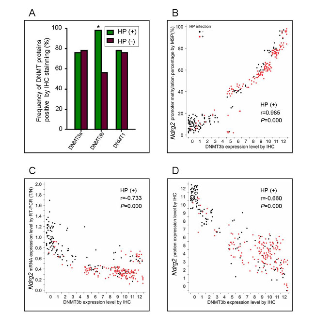 Correlation between DNMT3b expression and