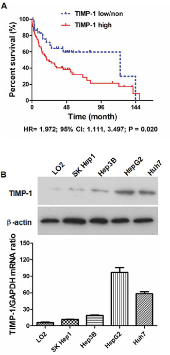 Aberrant overexpression of TIMP-1 in HCC tissues was associated with worse outcome after liver resection.