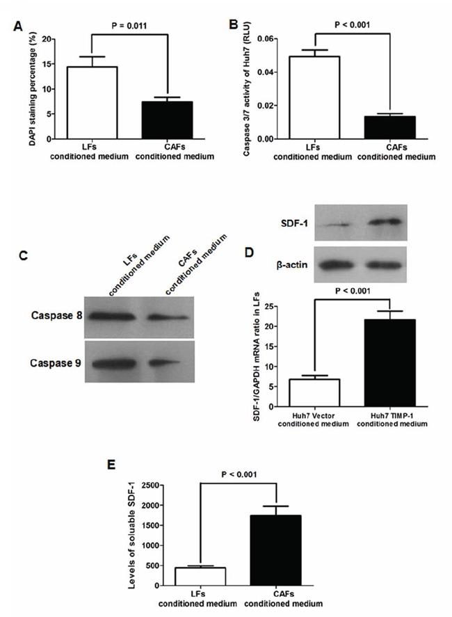CAFs inhibited Huh7 apoptosis via activating SDF-1/CXCR4 pathway.