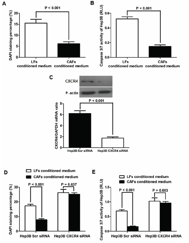CAFs inhibit apoptosis by the SDF-1/CXCR4 pathway in Hep3B cells.