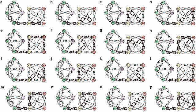 Inherent evolutional routes from normal gastric epithelial cell attractor A1 to GC cell attractors P1 and P2.