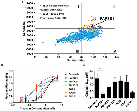 siRNA kinome screens identified PAPSS1 as a target that can be silenced to improve cisplatin activity.