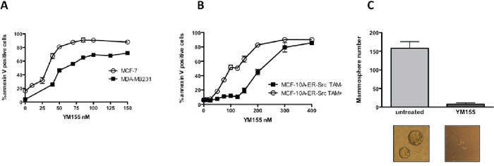 YM155 preferentially induces cell death in breast cancer cells and targets cancer cell with stem-like phenotype.