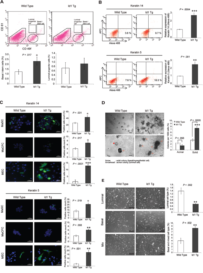 Id1 induces the expansion of the MaSC-enriched basal subpopulation.
