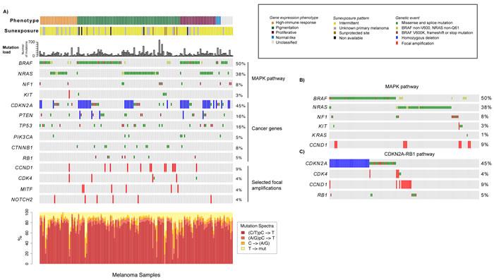 Analysis of the mutational landscape in melanoma tumors.