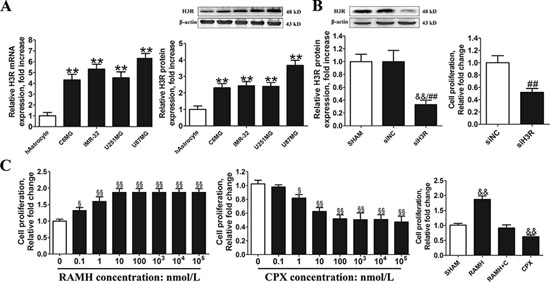 Inhibition of the H3R expression by siRNA or an antagonist decreased the proliferation of U87MG cells.