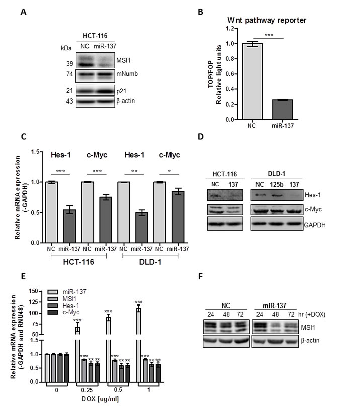 miR-137 negatively regulates Notch and Wnt signaling in colon cancer cell lines.