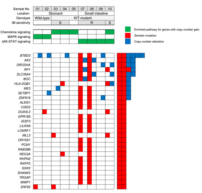 Recurrently mutated genes identified by whole-exome sequencing and the enriched KEGG pathways for genes altered by copy number gain in GISTs (IM, imatinib mesylate; S, sensitive; R, resistant).