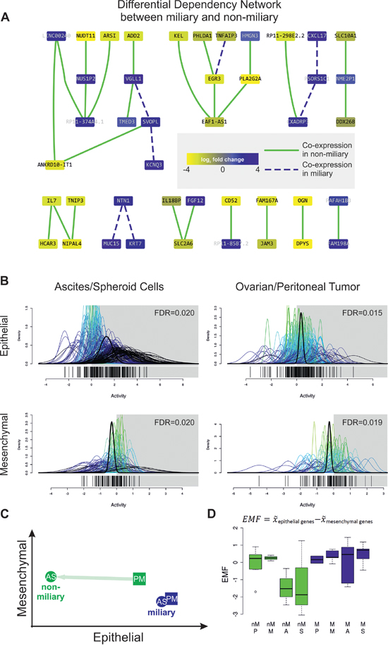 A. Differential Dependency Network (DDN) between miliary and non-miliary samples constructed from the 90 significantly differentially expressed genes between both tumor spread types.