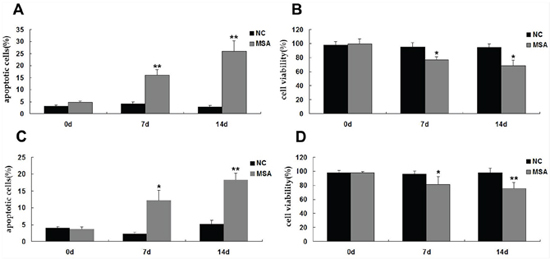 Effects of MSA-CSF on the viability and apoptosis of SH-SY5Y and U251 cells.