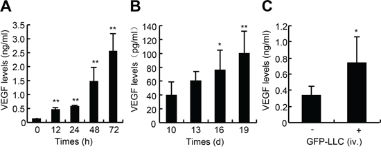 VEGF levels in the medium of LLC and sera of mice bearing either LLC xenografts or metastatic LLC.