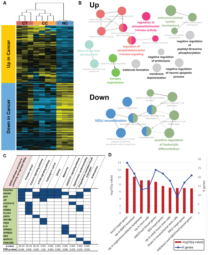Functional enrichment of commonly upregulated or downregulated genes in both CT and CC samples.