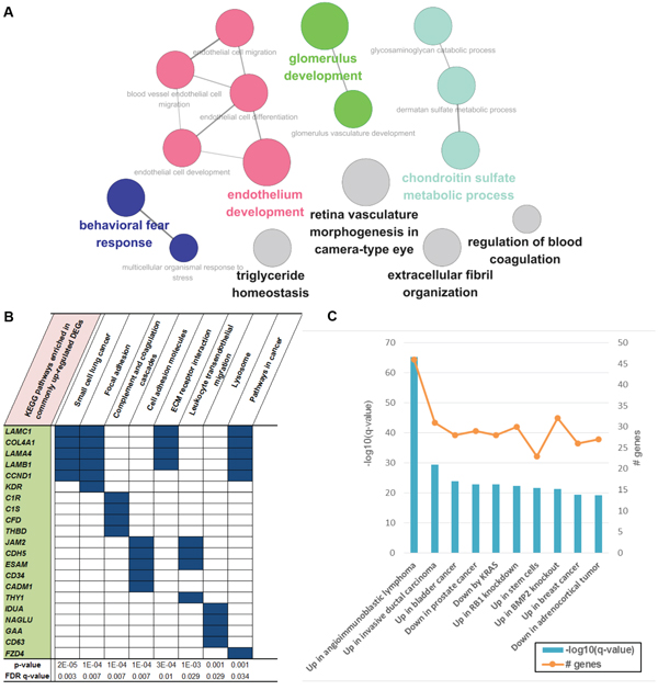 Functional enrichment of genes that were upregulated only in CT samples.
