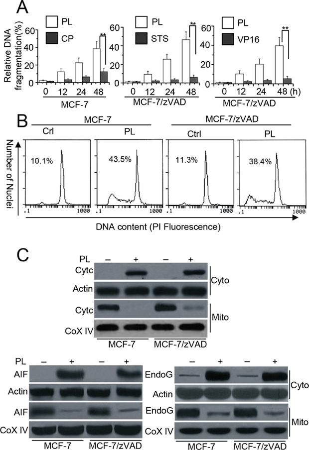 PL induces cell death in cancer cells independent of caspase.
