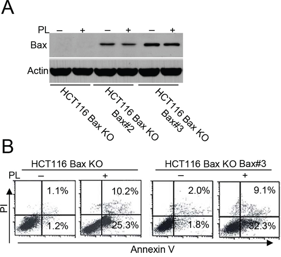 Bax restoration could not efficiently enhance cell death.