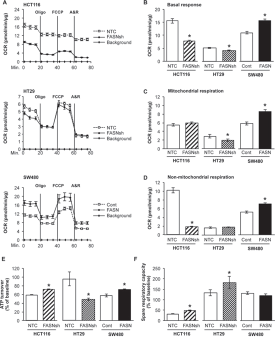 Fatty acid synthase regulates cellular respiration in CRC cell lines.