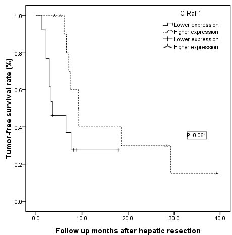 The patients with high levels of c-Raf-1 expression showed similar tumor-free survival rates compared with patients with low levels of c-Raf-1 expression (