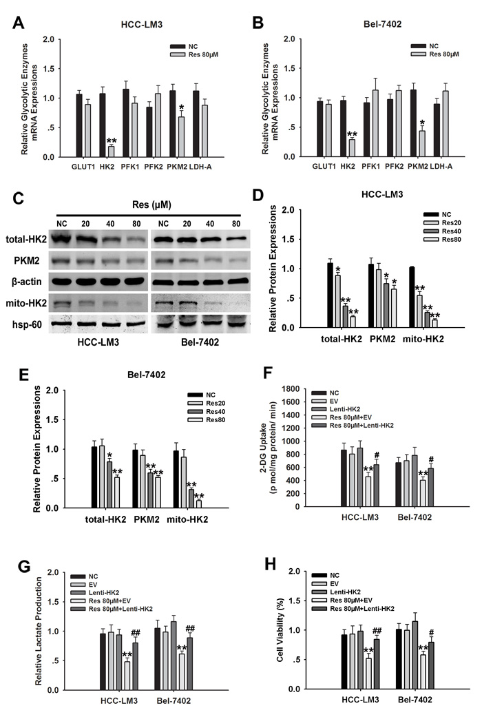 HK2 is essential for resveratrol-inhibited glycolysis and proliferation in aerobic glycolytic HCC cells.