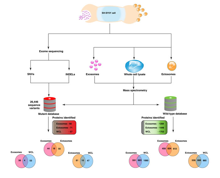 Integrated genomics and proteomics workflow.