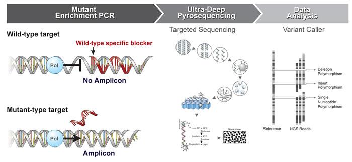 Schematic diagram of the enrichment PCR-UDP workflow.