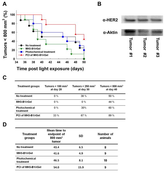 Treatment response following PCI of MH3-B1/rGel in SKOV-3 xenografts.