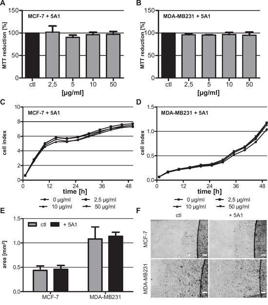 Anti-CSF-1 antibody 5A1 does not exert cytotoxic effects on tested breast cancer cells.