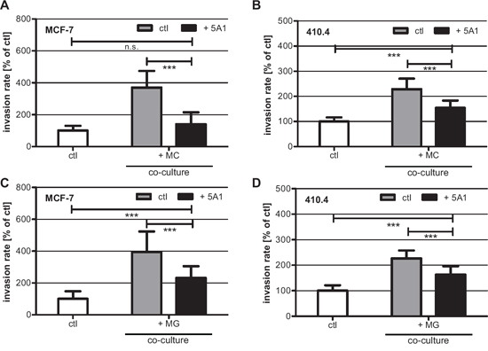 5A1 decreases MG- and MC-induced invasiveness of MCF-7 and 410.4 cells.