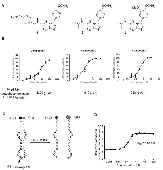 Chemical synthesis and biological activity of a human IRE1 kinase inhibitor that stimulates RNase activity.