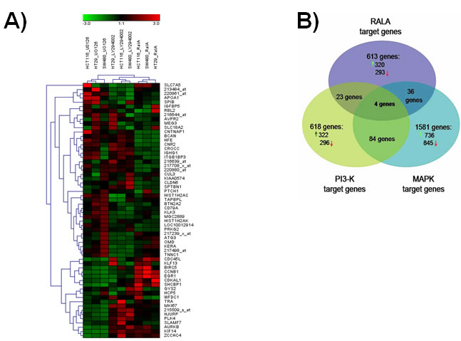 RAL pathway-restricted gene expression in colorectal cancer cell lines.