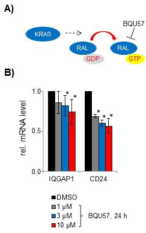 Effect of the RALA inhibitor BQU57.