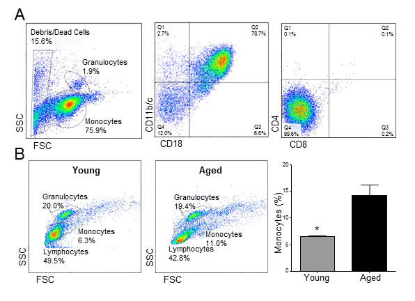 Aging causes monocytosis in rats.
