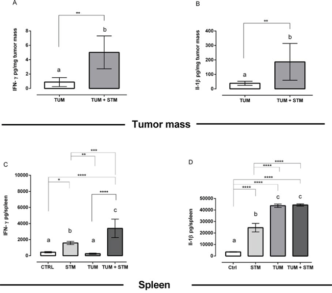 STM treatment promotes IFN-γ and IL-1β production in the tumor masses and spleens at 30 days PTI.