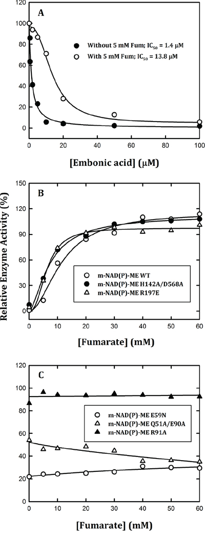 Effects of fumarate on the reversible inhibition of human m-NAD(P)-ME enzyme activity by EA.