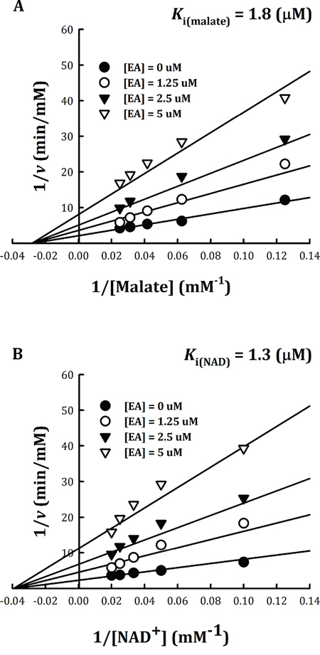 Non-competitive inhibition of human m-NAD(P)-ME by embonic acid (EA).