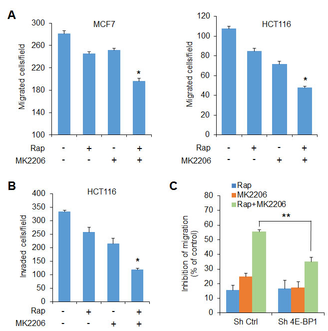 The effects of AKT and mTORC1 activation on cell migration and invasion are mediated by 4E-BP1.
