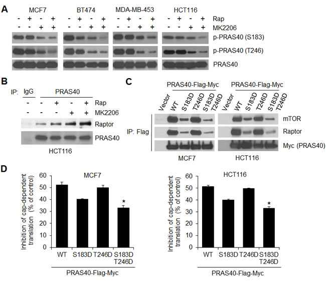 Combined inhibition of AKT and mTORC1 is required for effective inhibition of PRAS40 phosphorylation on both S183 and T246 and induction of PRAS40-repressive function on mTORC1.