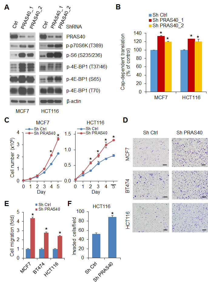 Silencing PRAS40 expression upregulates mTORC1 activity and promotes cell growth and motility.